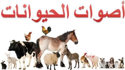 تعل م أسماء أصوات الحيوانات 30 صوت حيوان أليف ووحشي صغارنا
